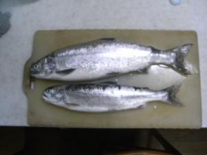 琵琶湖で捕れた鱒